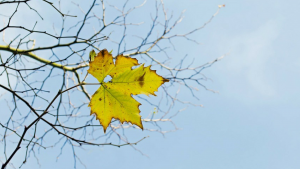 """Review of """"The Last Leaf,"""" a Short Story by O. Henry"""